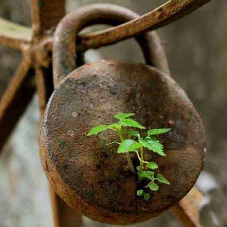 A old rusted lock with a plant growing in the keyhole